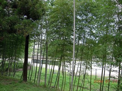 森林の写真その1