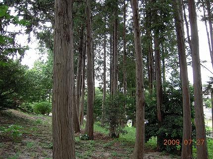 森林の写真その2