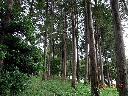 森林の写真その3