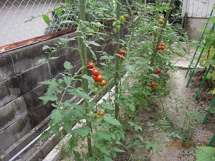 収穫物の写真その1